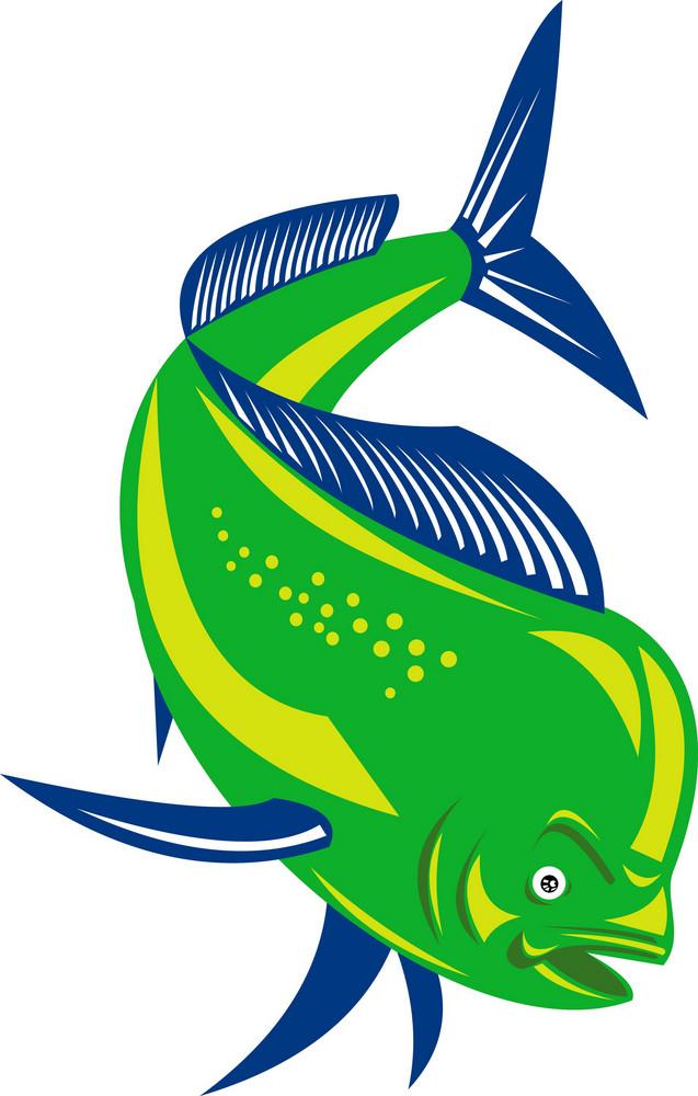 Dorado Dolphin Fish Mahi-mahi Jumping