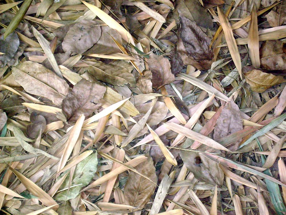 Dried_leaves