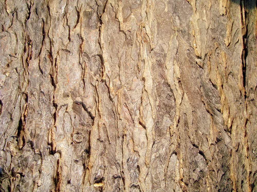 Dried_tree_bark