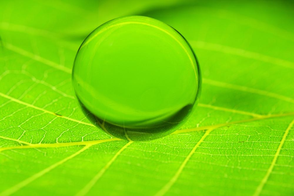 Droplet On Leaf