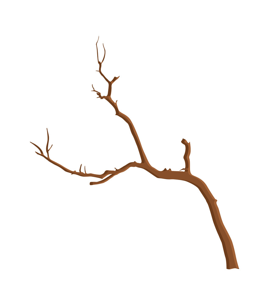Dry Forest Tree