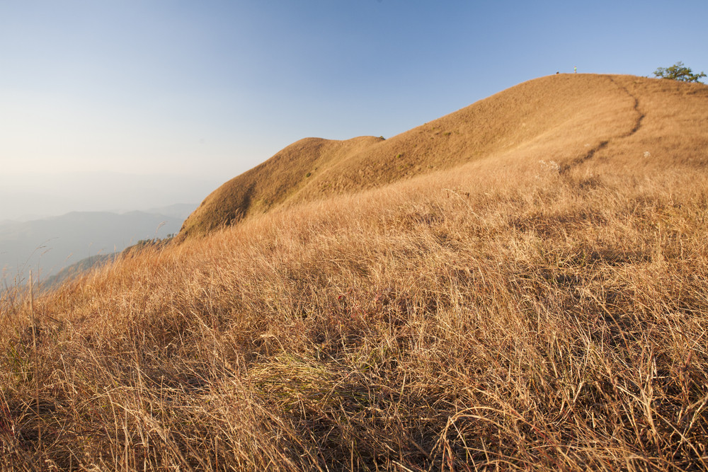 Dry grass and wild  on Monjong mountain. Chiang Mai, Thailand