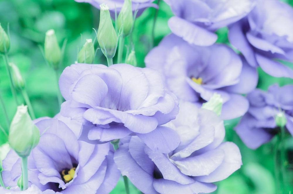 Pastel Flower