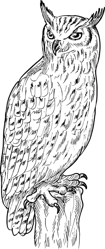 Eagle Owl Drawing