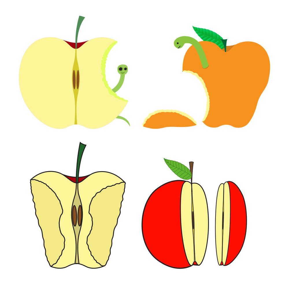 Eaten And Half Apples Vector