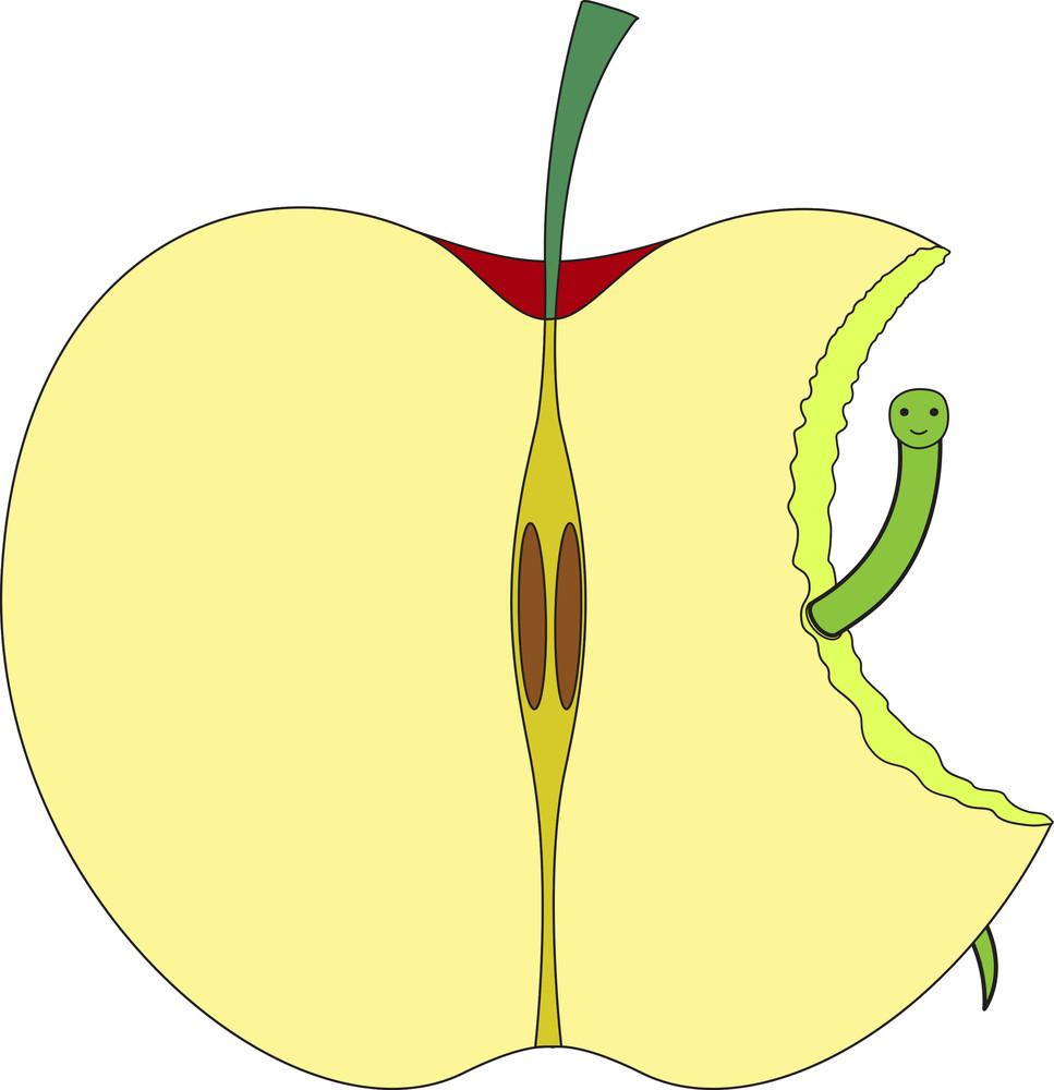 Eaten Half Apple With Worm