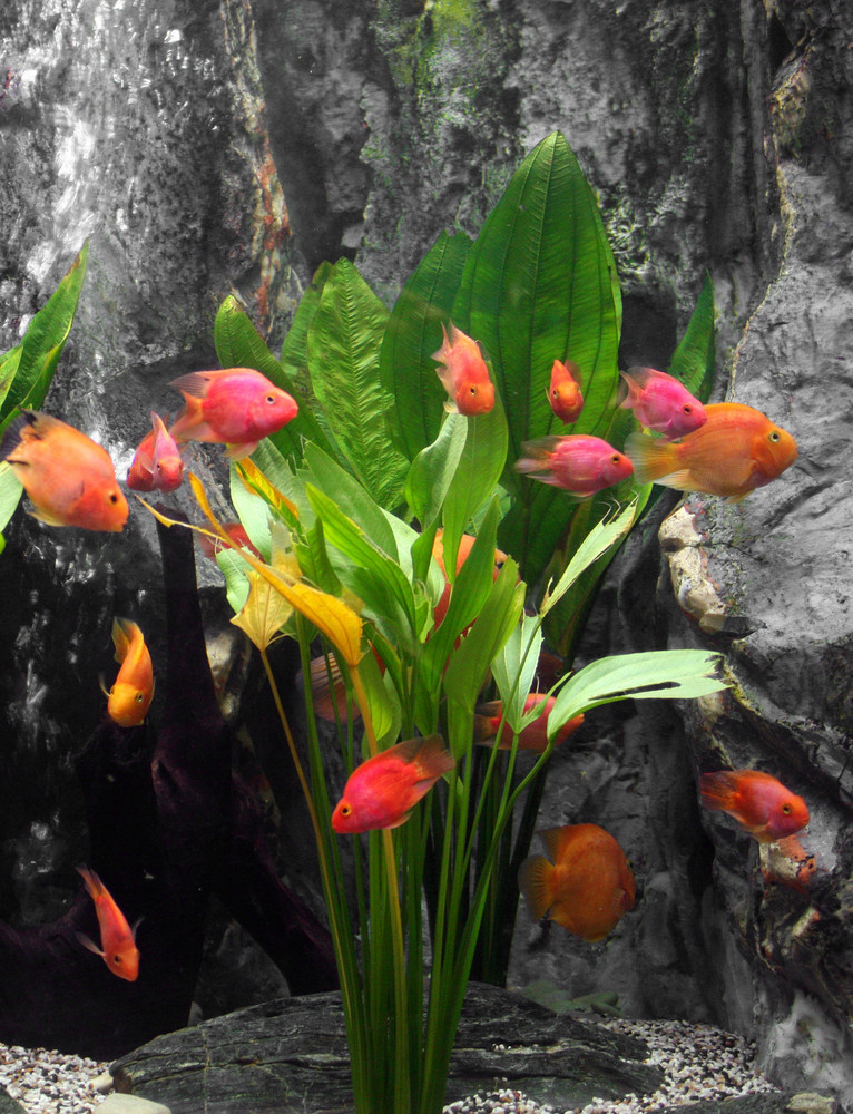 Exotic Fish Set As A Bunch Of Tulips