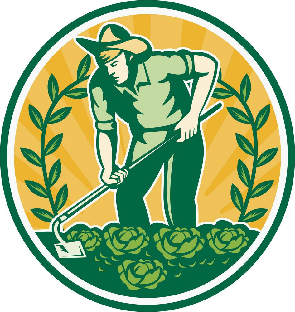 Farmer Gardener With Garden Hoe Cabbage