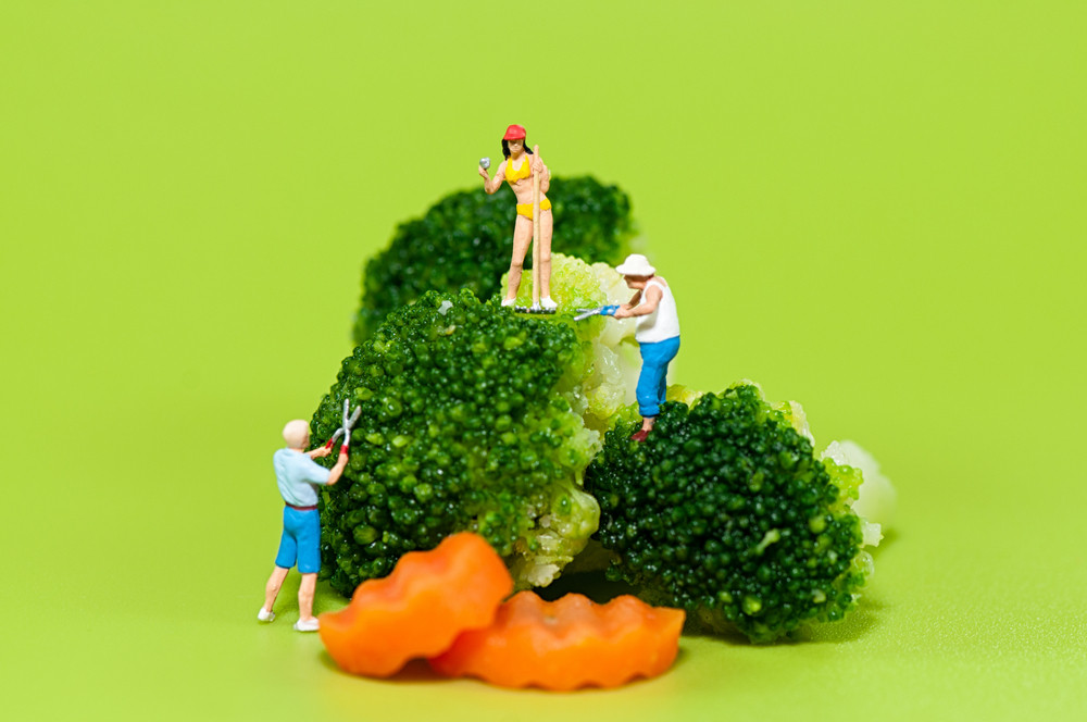 Farmers Harvesting Broccoli