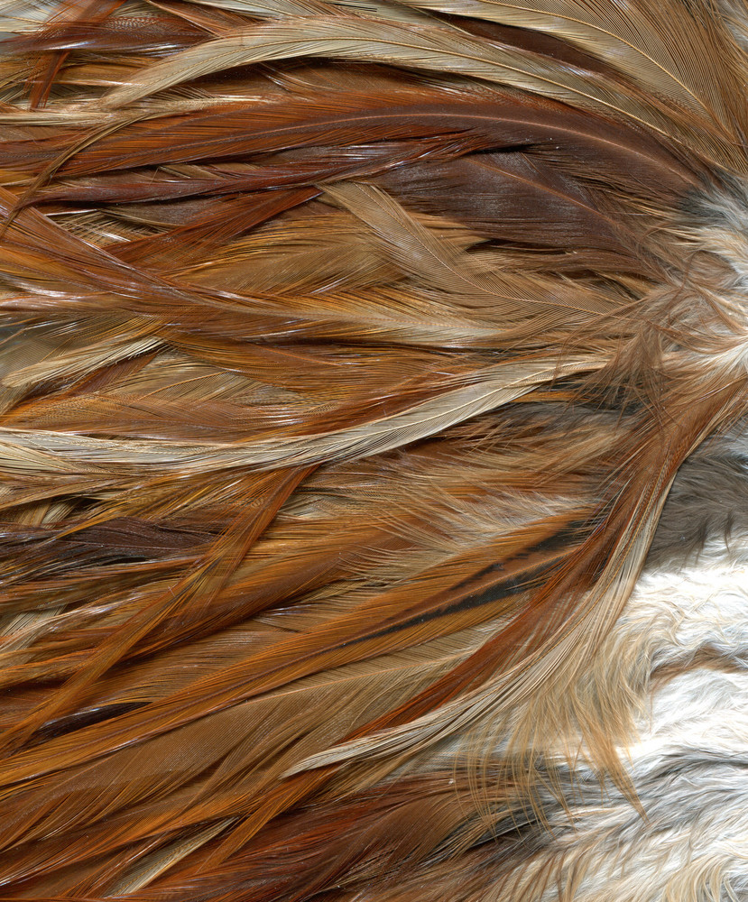 Feathers 4 Texture