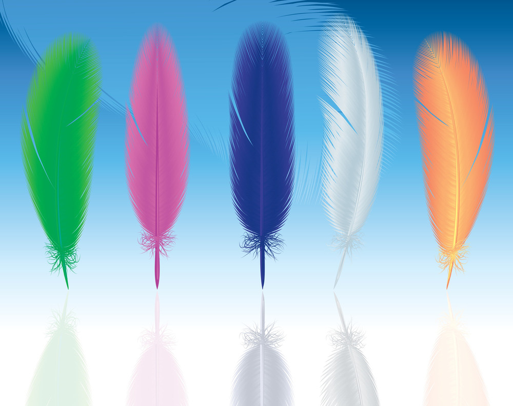 Feathers. Vector.