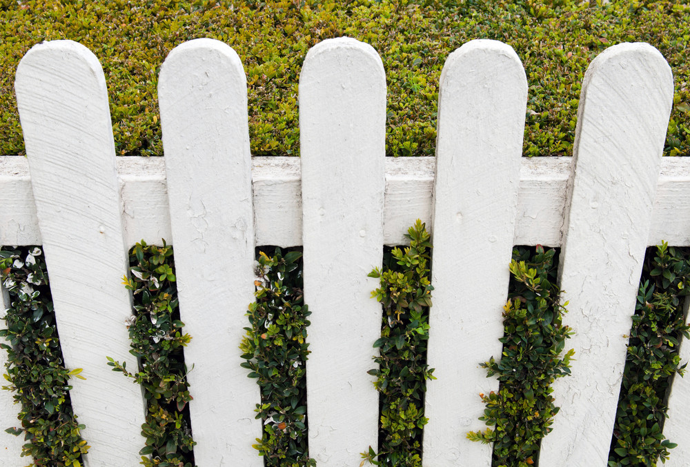 Fence With Hedge