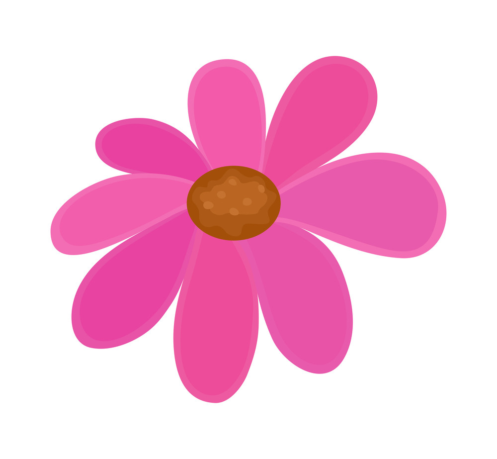 Festival Pink Flower