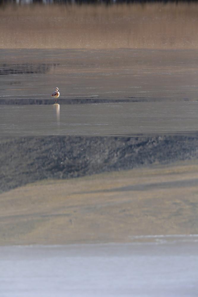 Flamingo feeding in sunlit waters