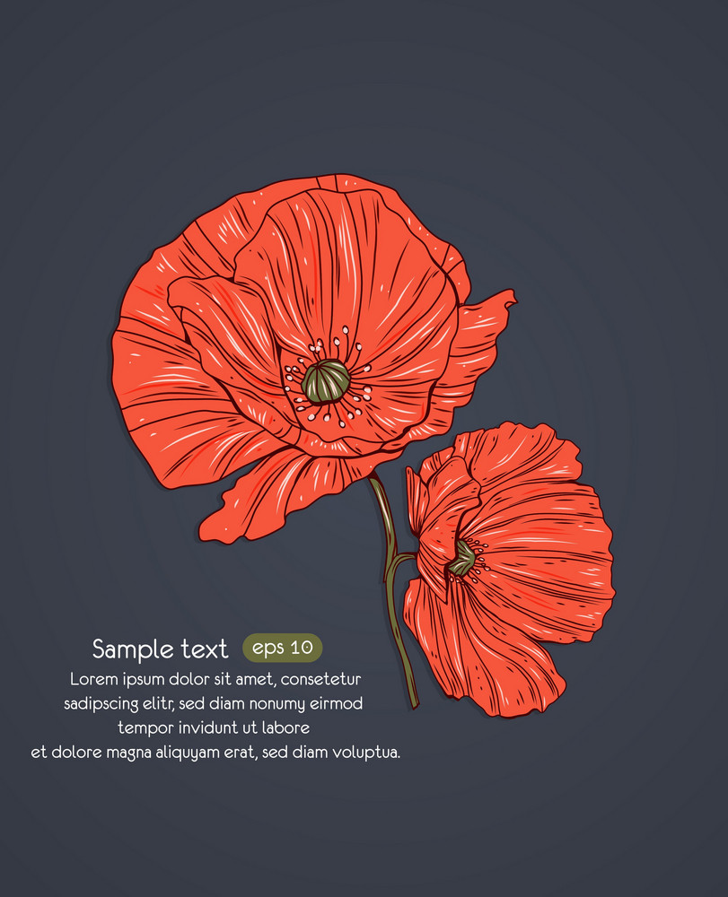 Floral Vector Background With Poppy