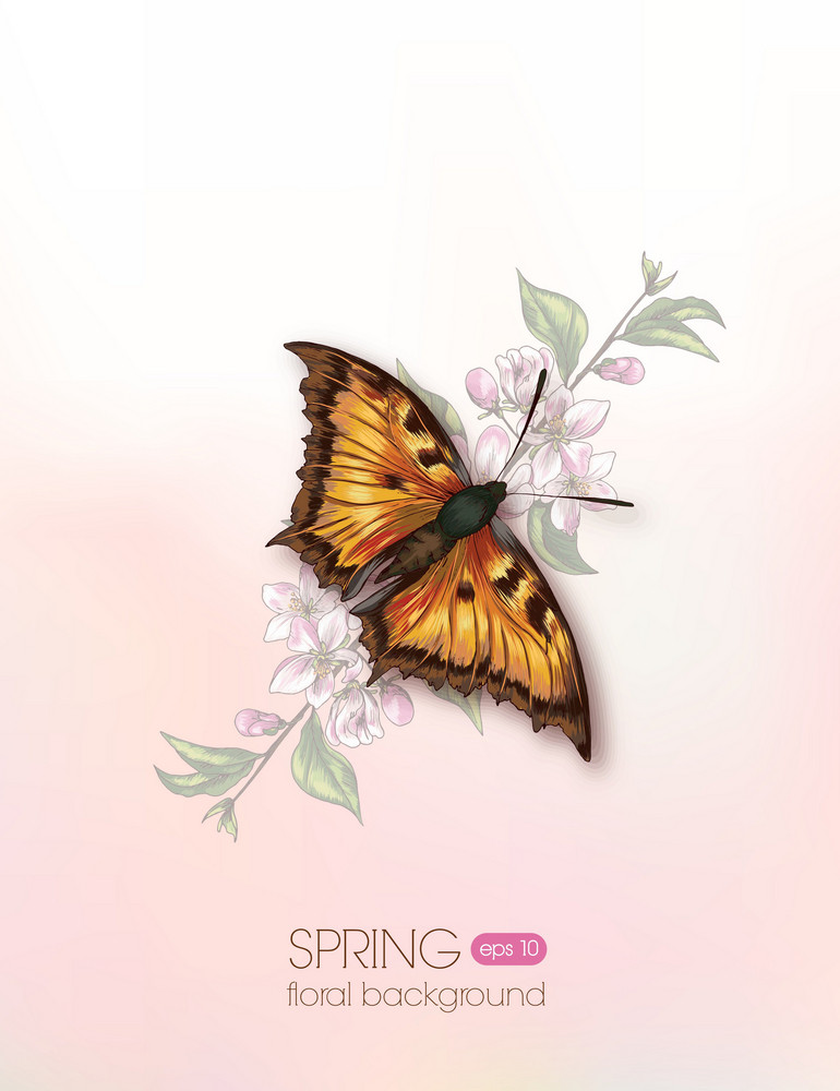 Floral Vector Illustration With Cherry Branches And Butterfly