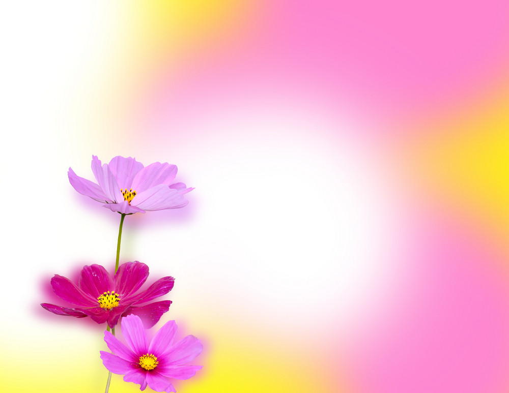 Flor do fundo bonito