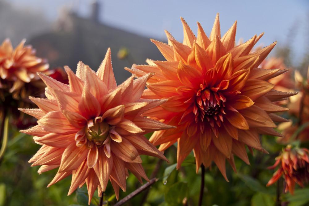 Flower Garden In The Morning