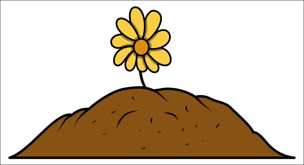 Flower Plant Grown In Soil
