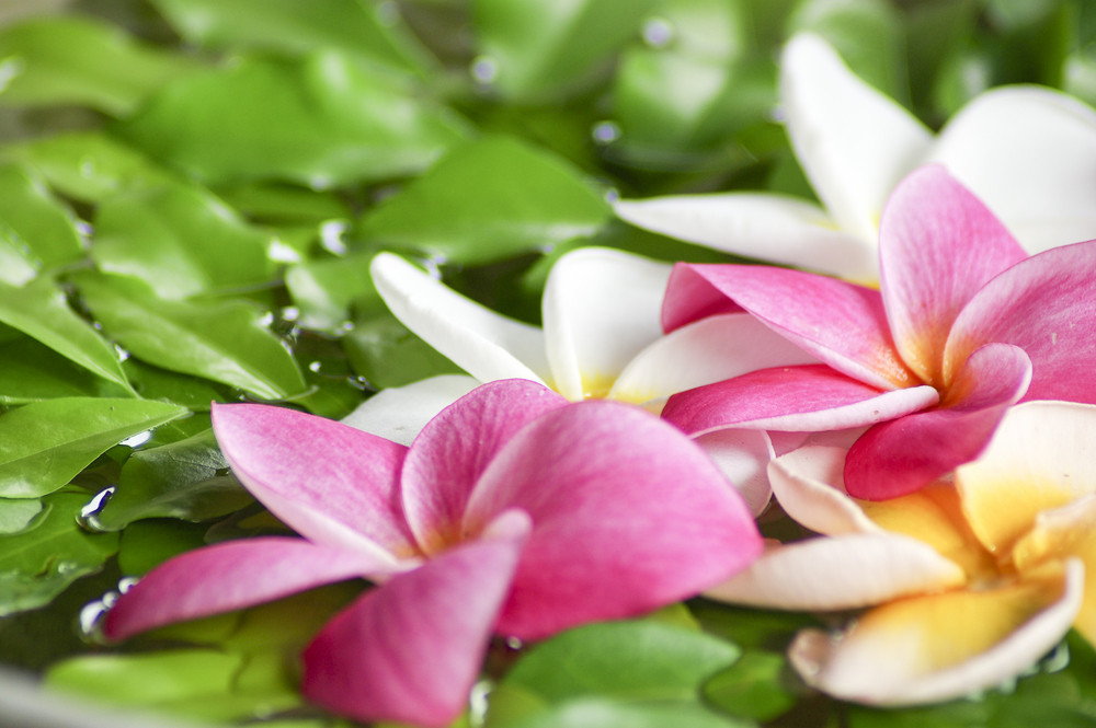 Flower spa massage on water