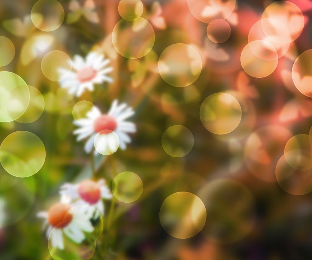 Flowers Bokeh Background