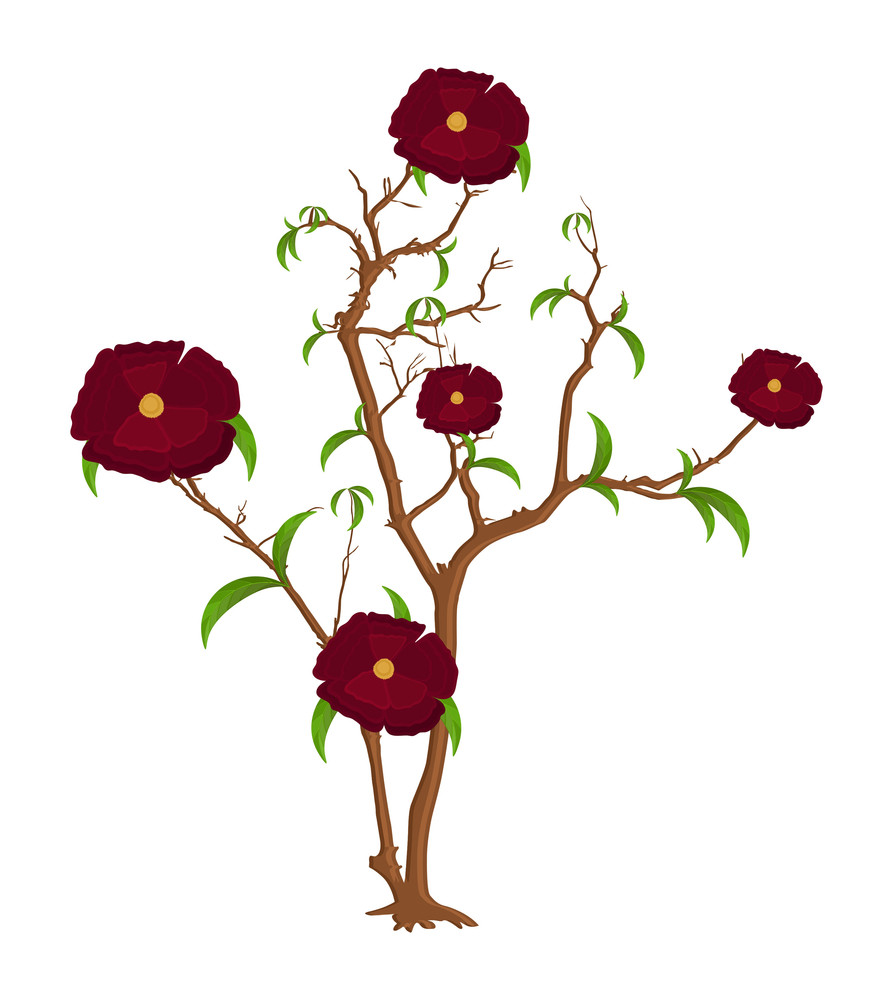 Flowers Branches Vector Design