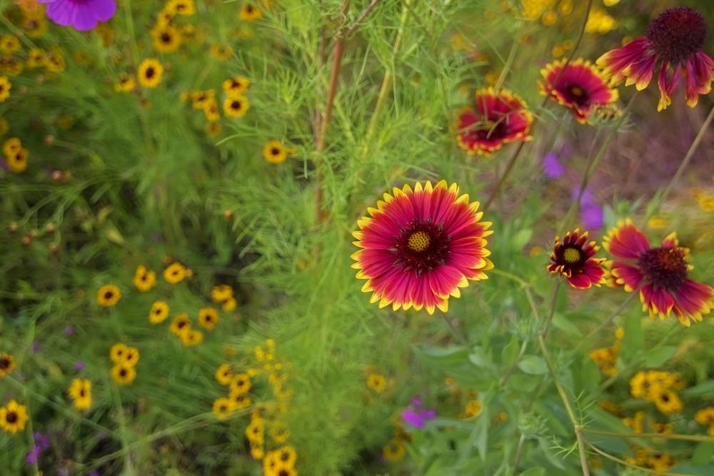 Flowers In Garden Background