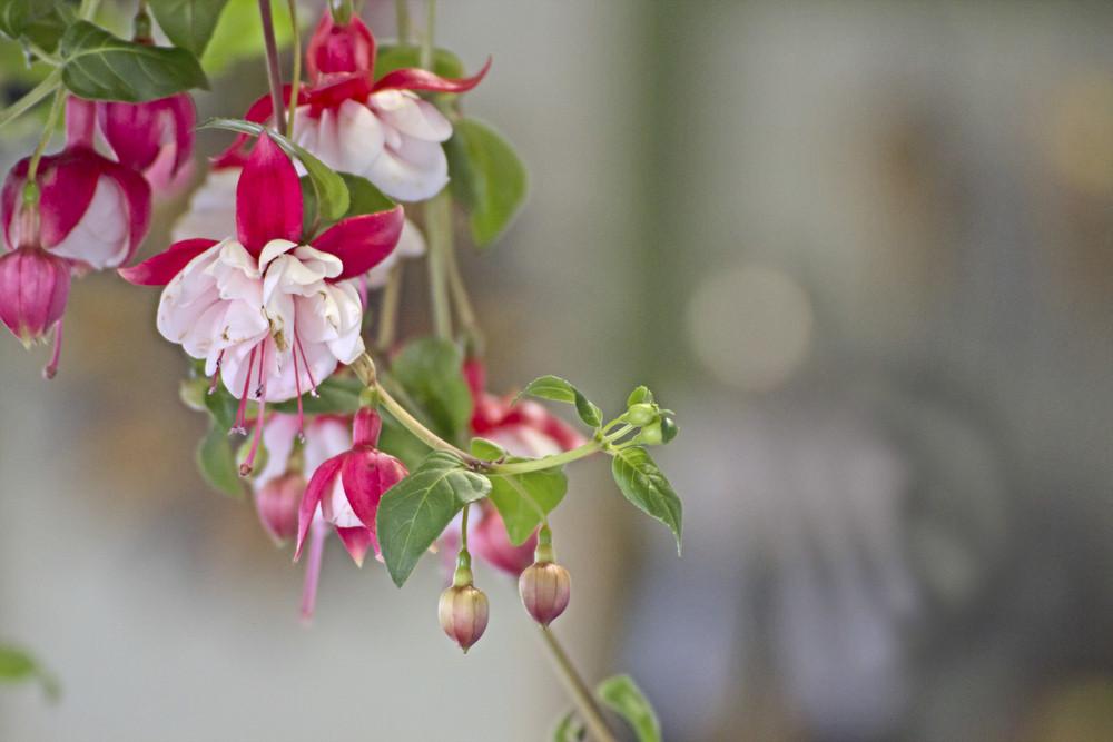 Flowers Twig