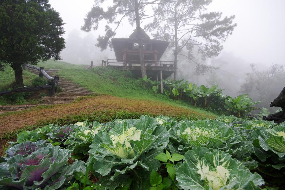 Fog on mountain Chiang mai