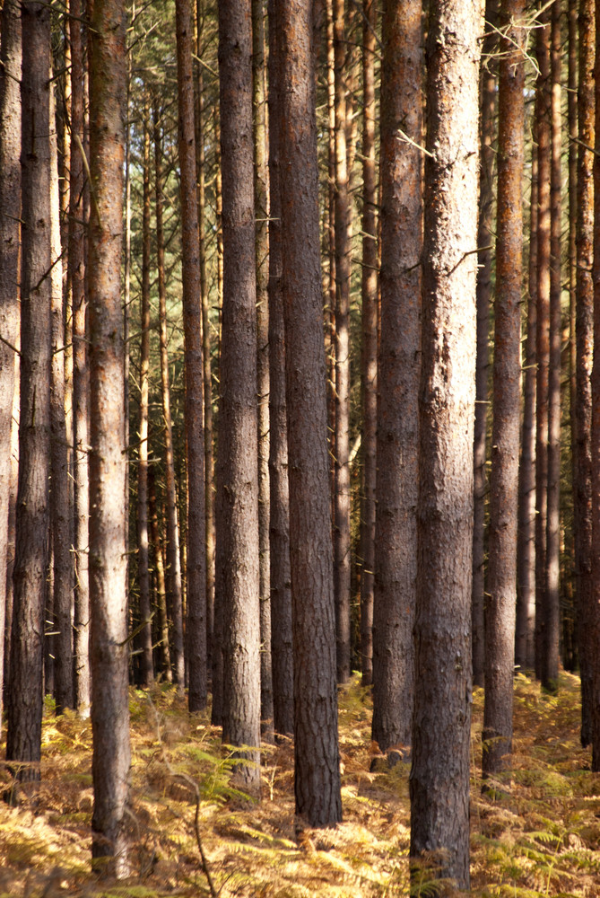 Forest Of Darss