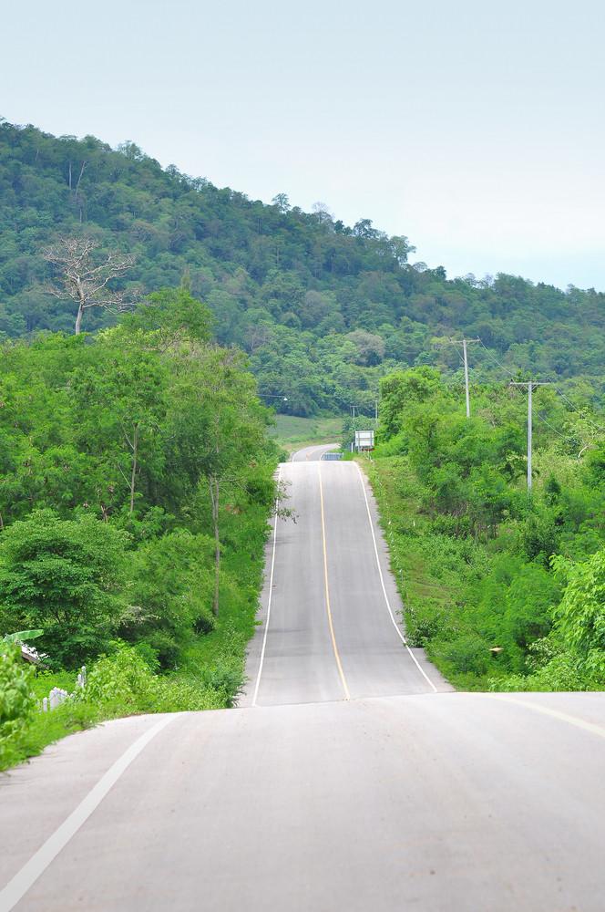 Forest Road. Landscape.