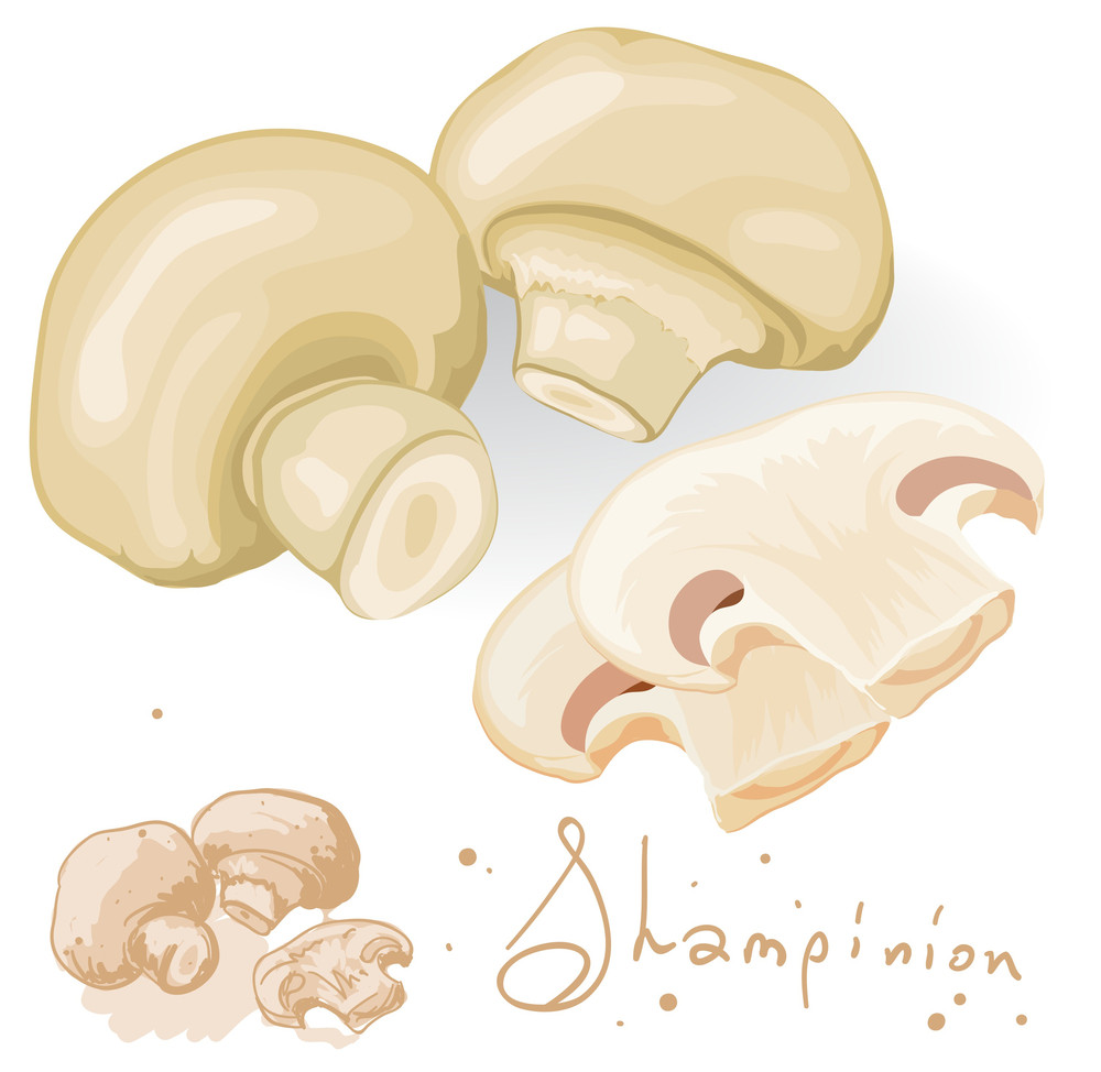 Fresh Champignon Mushrums. Vector.