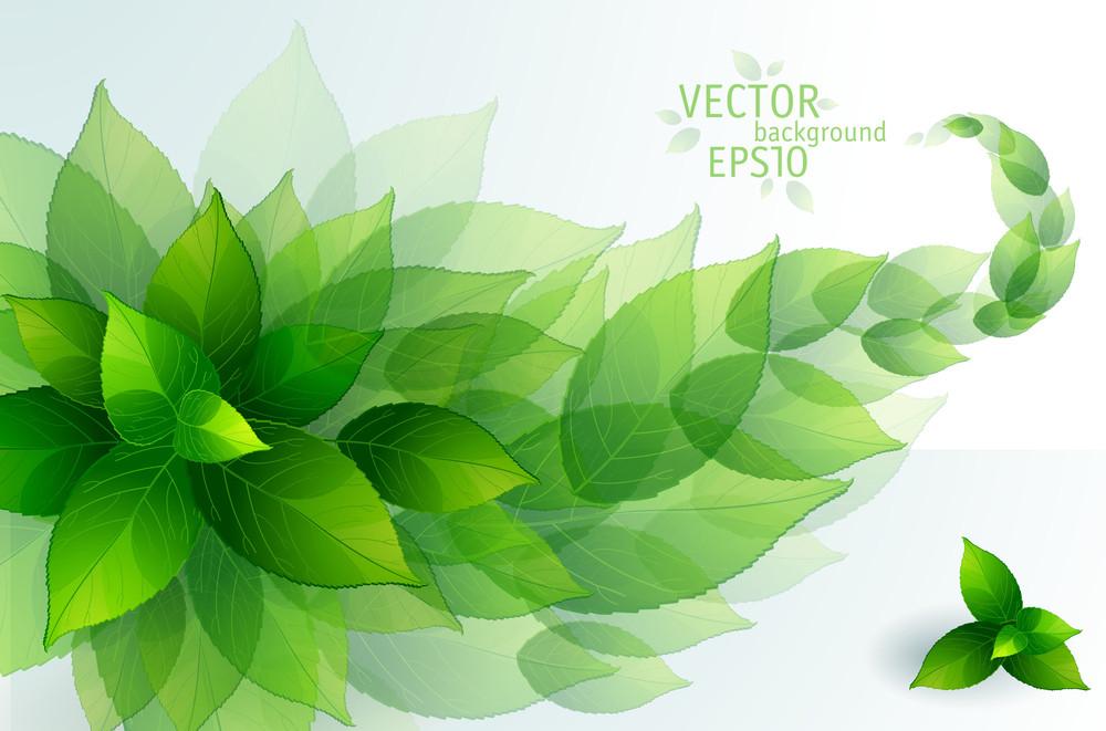 Fresh Green Leaves Vector Background.
