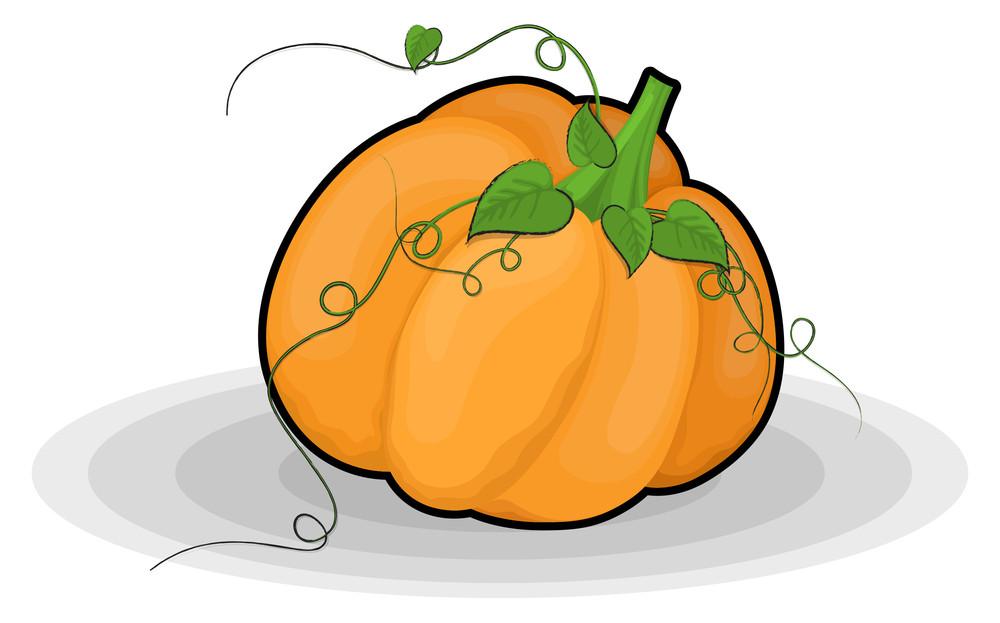 Fresh Organic Pumpkin Vector