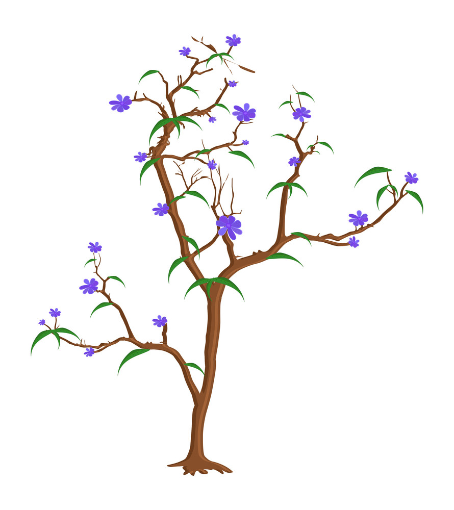 Fresh Purple Flowers Tree Branches