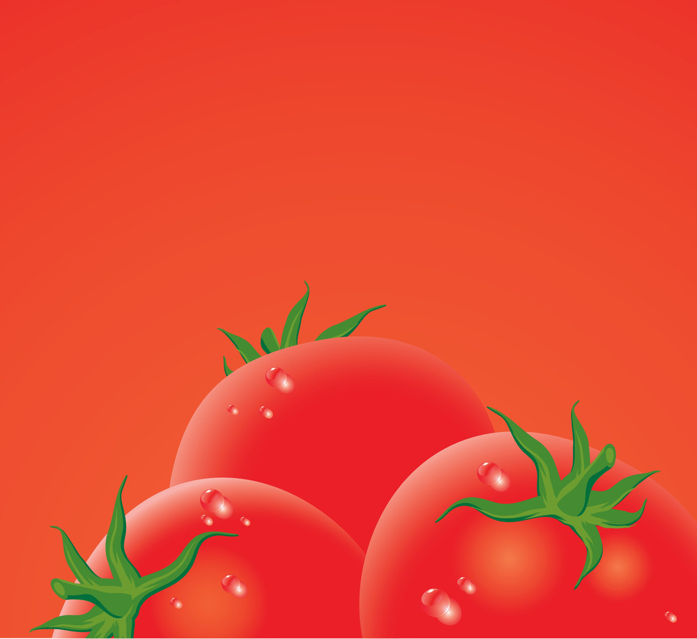 Fresh Tomato. Vector. No Gradient Meshes Used - Easy To Edit