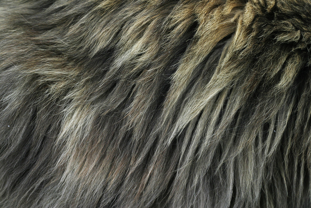 Fur 10 Texture