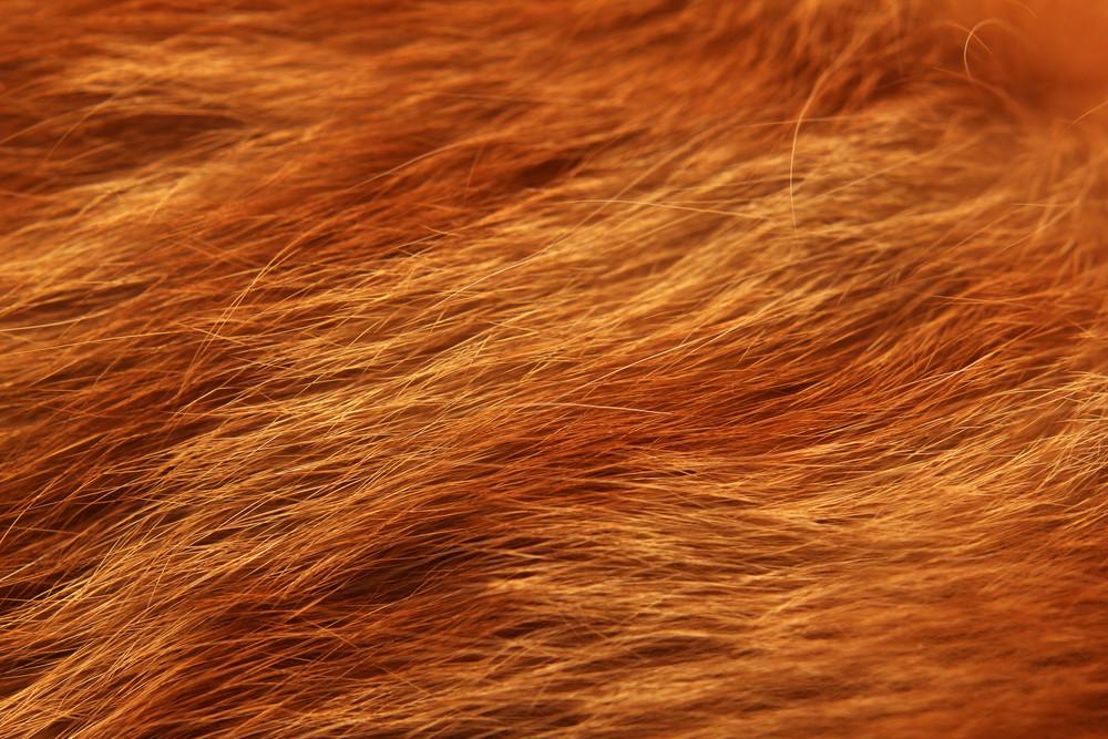 Fur Close Up