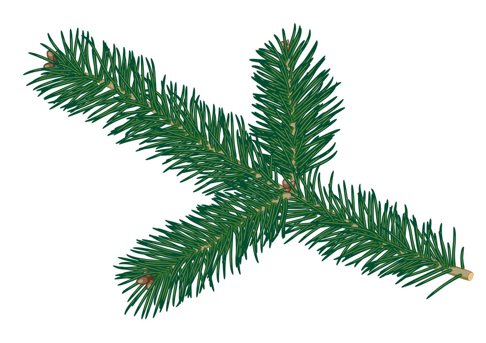 Fur-tree. Vector
