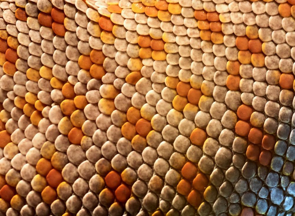 Gecko Skin Texture