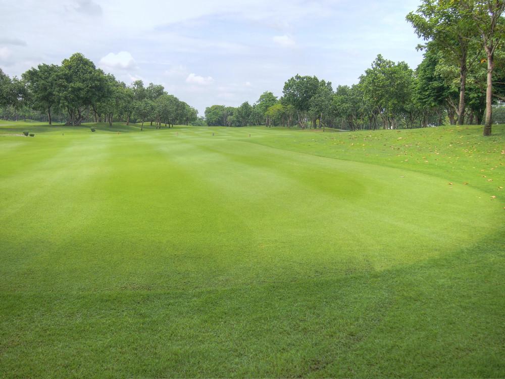 高爾夫球在綠色