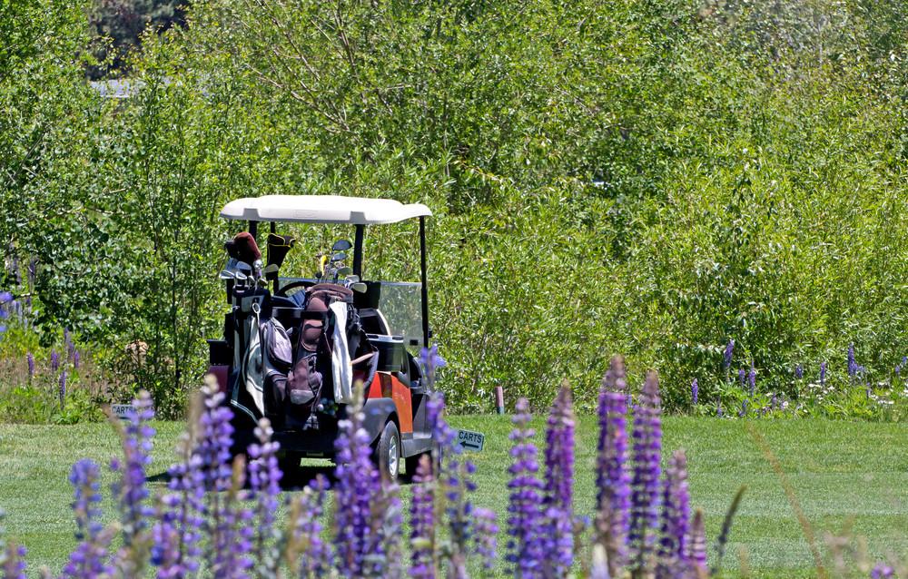 Golf Cart In Field