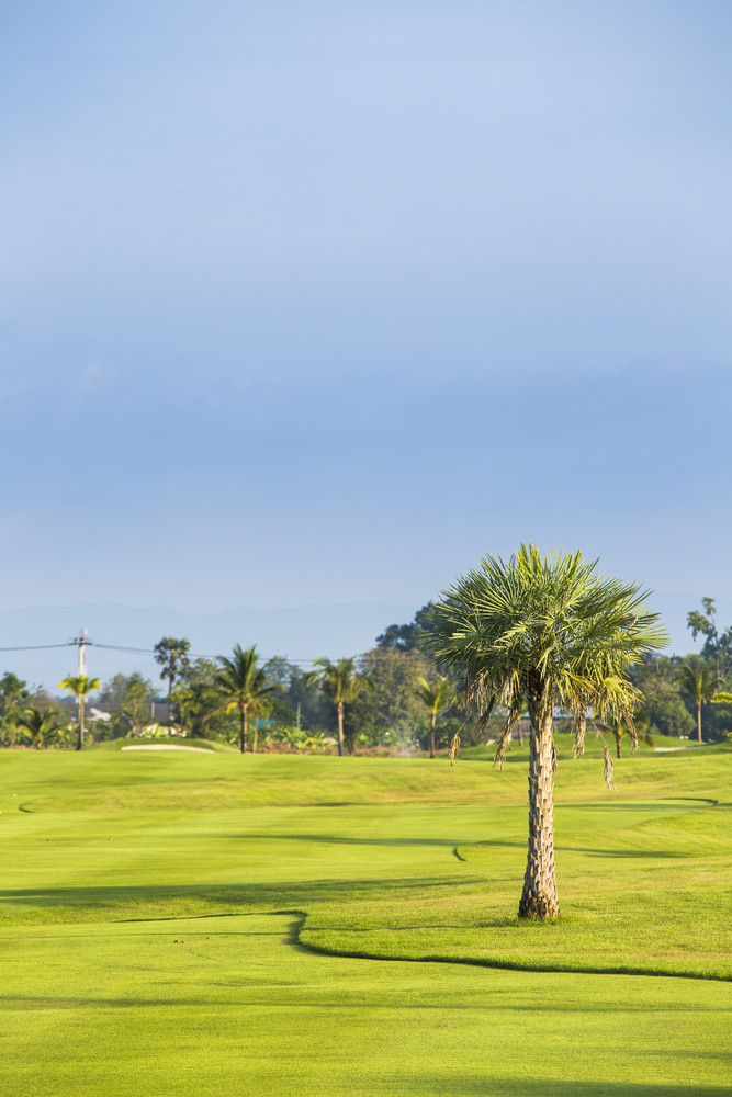 Golf green field garden with trees
