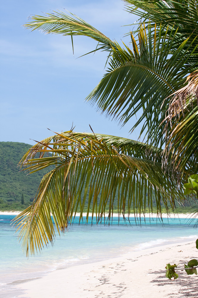 Gorgeous coconut palm trees overlooking Flamenco beach on the Puerto Rican island of Culebra.