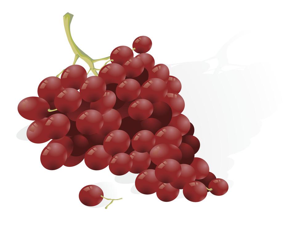 Grape. Vector.