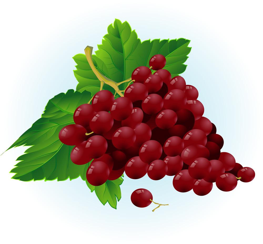 Grapes. Vector.