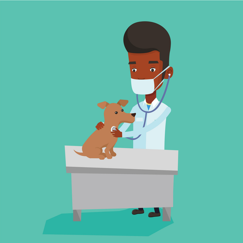 African-american veterinarian examining dog in hospital. Veterinarian checking heartbeat of a dog with stethoscope. Concept of medicine and pet care. Vector flat design illustration. Square layout.