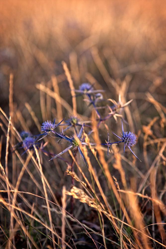 Amazing wild dry plants