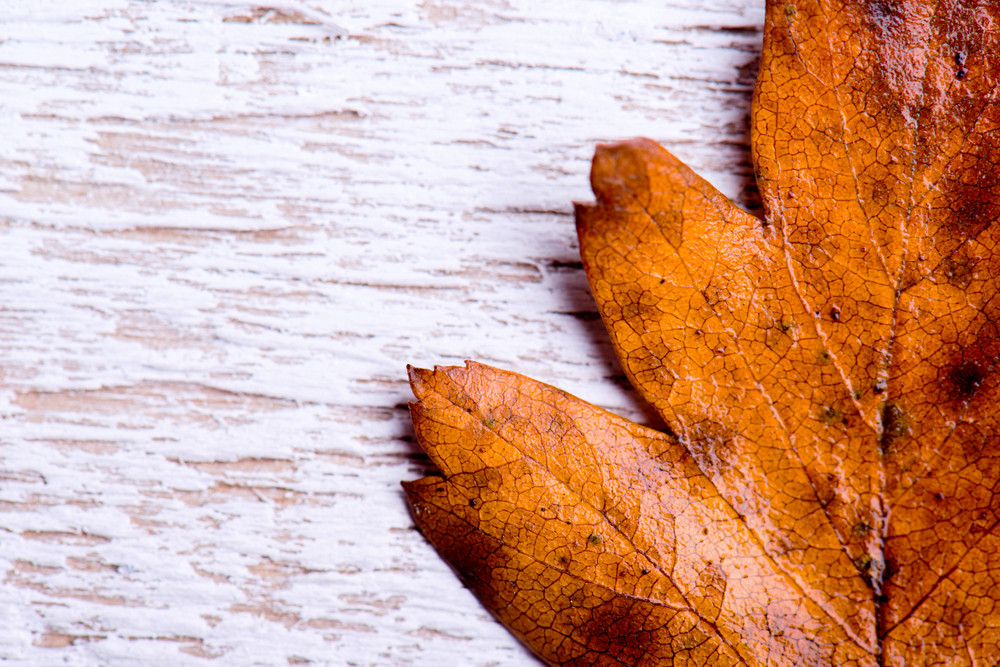 autumn composition brown leaf on white wooden background copy