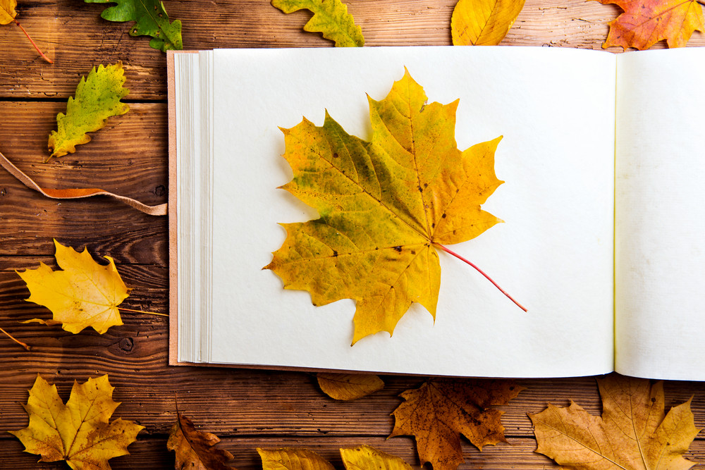 Autumn leaf composition with photo album. Studio shot on wooden background.